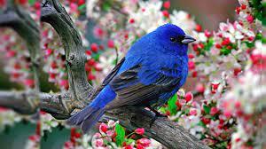 Graphic Bird Desktop Wallpaper Data ...
