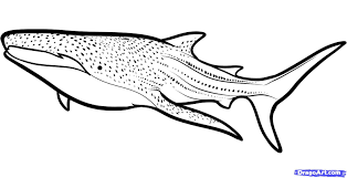 Small Picture Whale Shark Coloring Pages