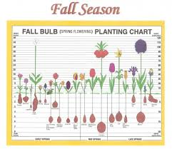 Spring Bulb Planting Depth Chart Part 1 Bulbs To Plant In