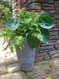12 Container Garden CombosContainer Garden Shade Plants