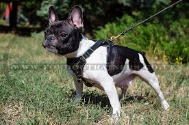 small dog harness for french bulldog