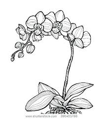 Orchid Flower Coloring Pages Hoofardus