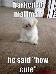 Dog Meme - Meme Country via Relatably.com