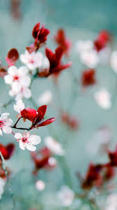 Spring Wallpaper For Android - Best ...