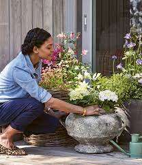 how to grow beautiful cut flowers in