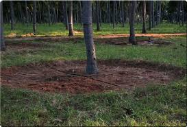 drip irrigation for coconut