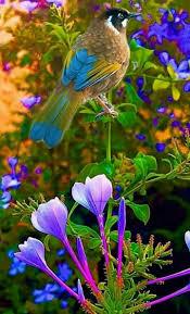 Resultado de imagem para campos floridos lindos