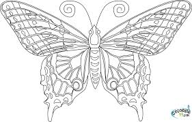 Small Picture Epic Butterfly Coloring Pages For Adults 30 On Free Coloring Kids