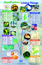 Classification Of Living Organisms Lessons Tes Teach