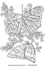 Butterflies Coloring Pages For Adults Cameronblackclub