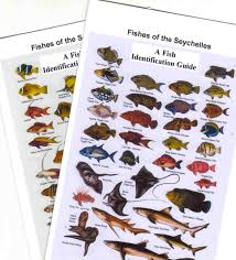 Australian Reef Fish Species Chart Fish Identification Guides Reef Fish Identification Guides