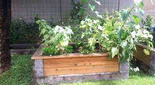 is pressure treated wood safe for vegetable gardens