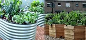 raised garden beds galvanized steel vs