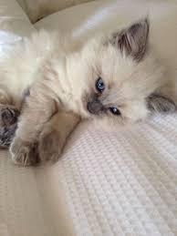cute fluffy cats tumblr.  Tumblr Kitten Kaboom For Cute Fluffy Cats Tumblr T