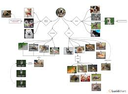 Doggo Meme Diagram Part 3 Video Diagram Lucidchart Blog