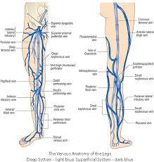 Leg Vein Chart Varicose Veins Redbacteria