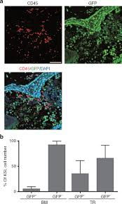Generation of Engraftable Hematopoietic Stem Cells From Induced.