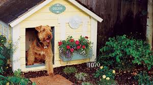 how to landscape a dog friendly garden