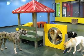 Columbia's #1 choice for dog daycare, dog boarding and dog training. Pampered Pet Hotel Spa Dog Daycare Dog Playground Pet Daycare
