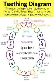 Teething Chart For Babies Teething And Your Baby Symptoms And Remedies Parenting Tips