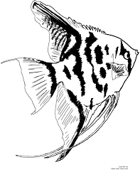 Small Picture Angel Fish Coloring Pages Printable Coloring Pages