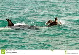 Illustrazione di una balena e di una tartaruga immagine stock