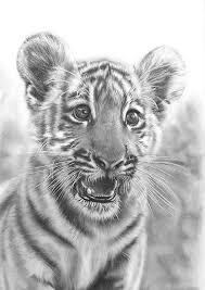 Disegni A Matita Cute Animals Disegni A Matita Disegni E Matita