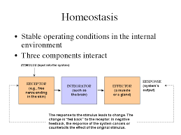 What Is Homeostasis In Biology Homeostasis Biology Definition Of Homeostasis Biology