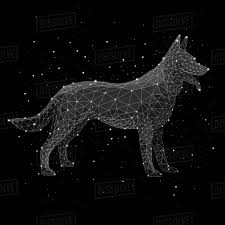 digital posite image of constellation forming wolf against black background