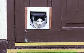 cat flap door how to install a cat flap in a screen door sureflap cat flap cat flap door