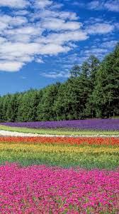 Iphone Wallpaper Nature Flowers ...