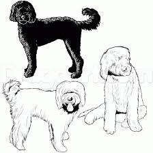 Small Picture Learn How To Draw a Labradoodle Pets Animals FREE Step by Step