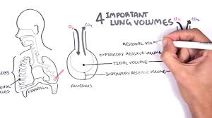 Lung Capacity Chart By Age Lung Volumes Physiopedia
