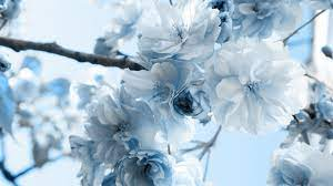 Aesthetic Light Blue Flower Wallpaper ...