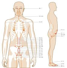 Acupuncture Wall Charts Download Download The Acupuncture Points Guidethe Entire Acupuncture