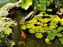 how to build a pond australian