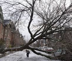 If your neighbour\u0027s tree falls in your yard, who pays? | Toronto Star