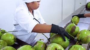 can this startup help lead the booming coconut water industry to can this startup help lead the booming coconut water industry to sustainability