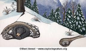 Plant And Animals Adaptations Venn Diagram How Do Animals Survive Winter Hibernation Migration Adaptation