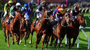 Horse Racing Betting Guide Picture