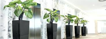 hire office indoor desk plants indoor plant hire best indoor office plants
