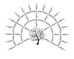 Blank Family Tree 4 Generations Family Tree Fan Chart Template