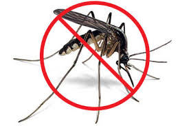 Image result for mosquito pictures