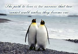 Penguin Love Quotes Magnificent Pin By Margaret MacKay On Love Penguins Forever Pinterest Penguins