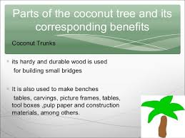 coconut tree ppt 14 parts of the coconut tree