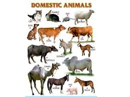 Science Animals Then And Now Philippine Wild Life Animal Reproduction