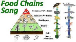 animal food pyramid. Contemporary Food With Animal Food Pyramid C