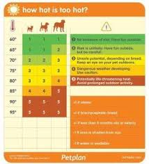 How Hot Is Too Hot For Your Dog Dogs Dog Temperature