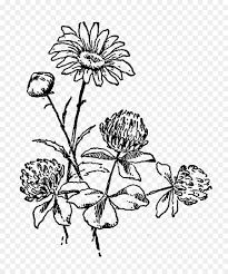 flower black and white drawing clip art flower black