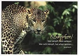 Poetische Postkarte Sprüche Kämpfen Amazonde Bürobedarf